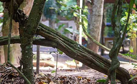 ¿Y si alguien intenta patentar la ayahuasca?